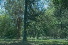 La reserva forestal