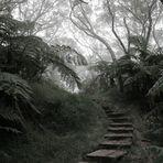 La Réunion (46)