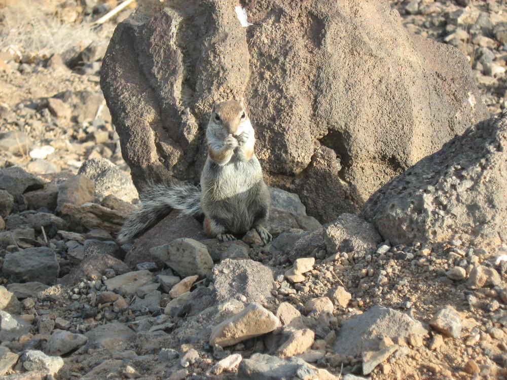 la richiesta dello scoiattolino
