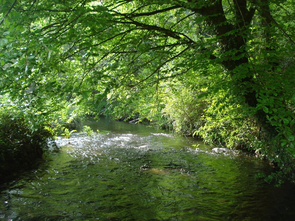 la riviere le goyen dans toute sa splendeur printaniére