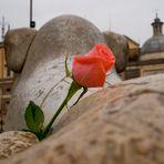 La Rosa e il Leone