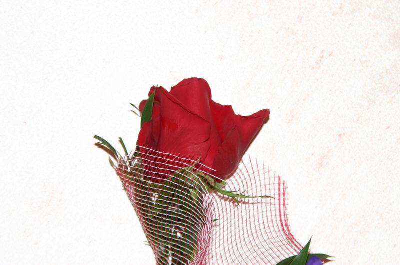 la rosa imprigionata