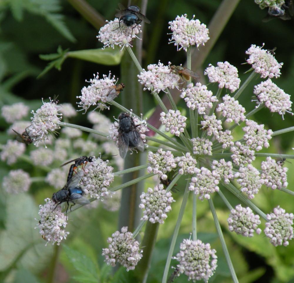 La scampagnata degli insetti