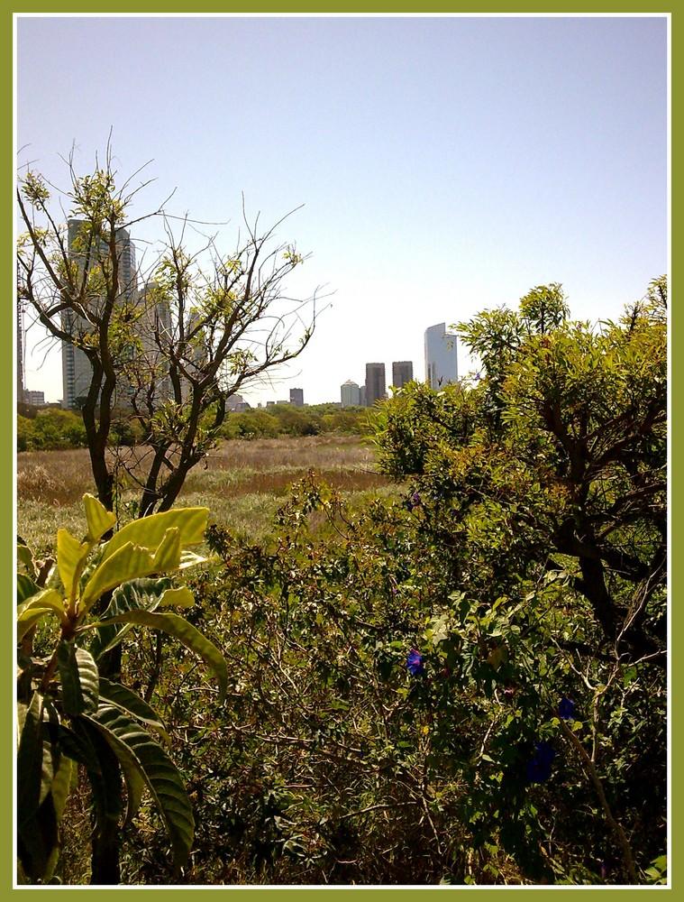 La selva en la ciudad