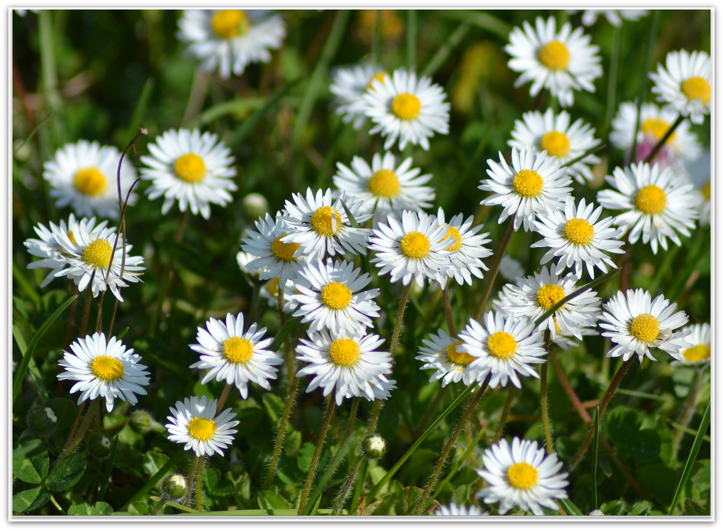 La semplicità della primavera...
