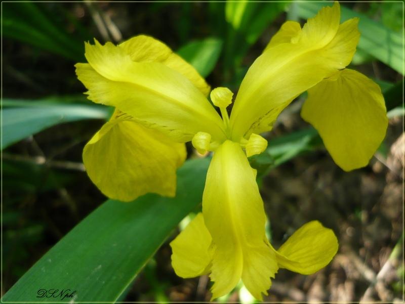 ....la signora in giallo...