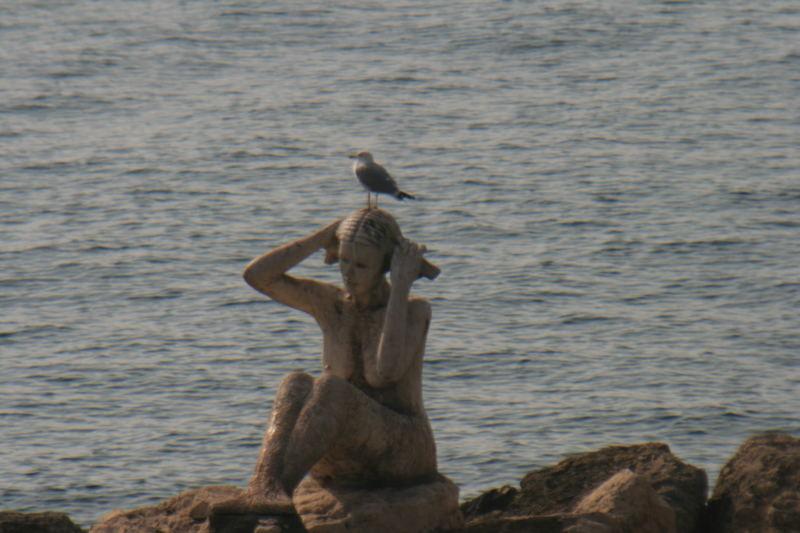 la sirena e il gabbiano
