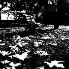 La soledad del parque