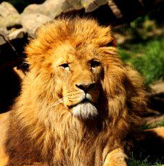 la solitude d'un roi