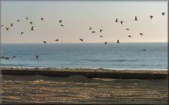 La spiaggia ai loro padroni...i gabbiani.