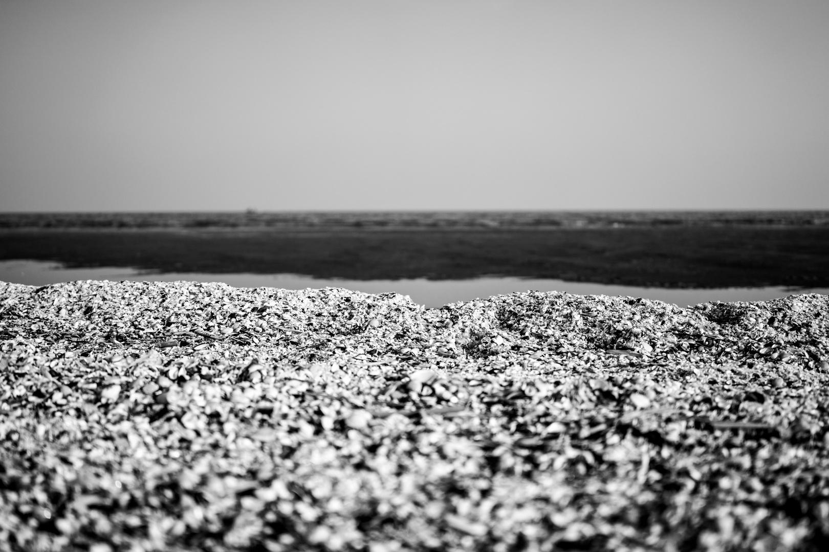 la spiaggia delle conchiglie