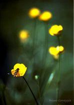 La strada delle api