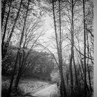 ..la strada nel bosco.