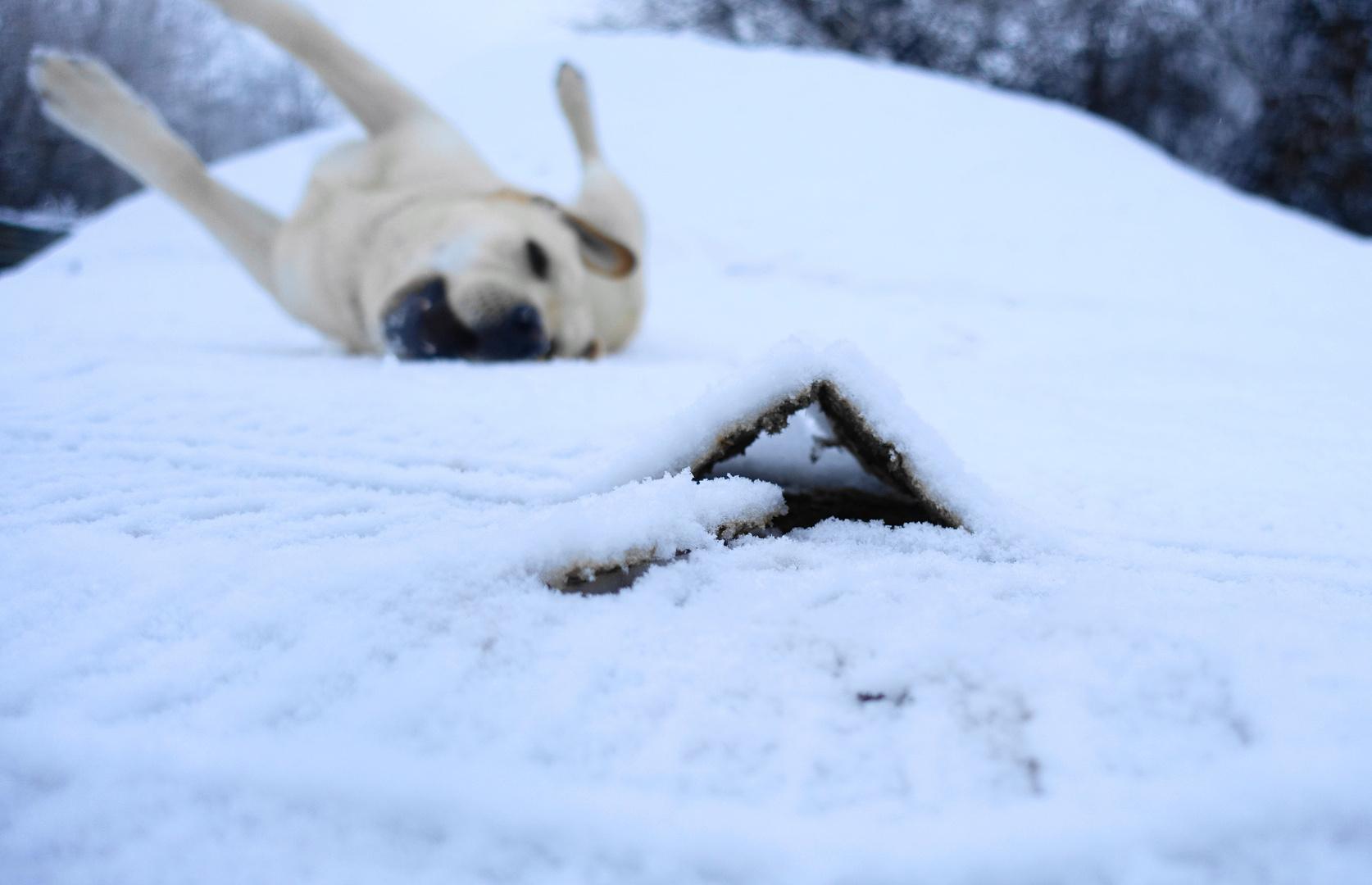 La tana del Labrador