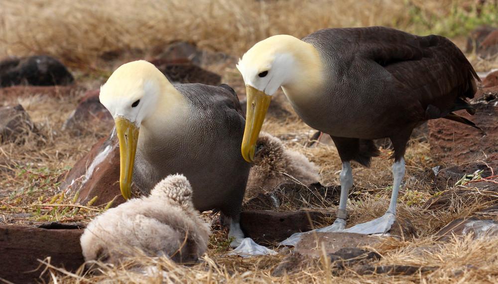 La tendresse des albatros