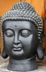 La testa del Buddha