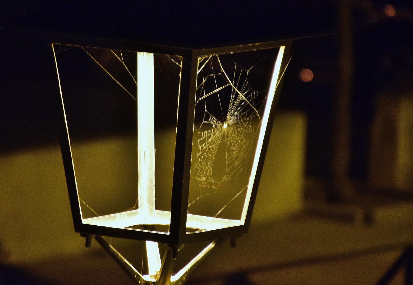 La toile d'araignée.....