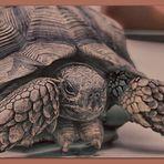 La tortuga I