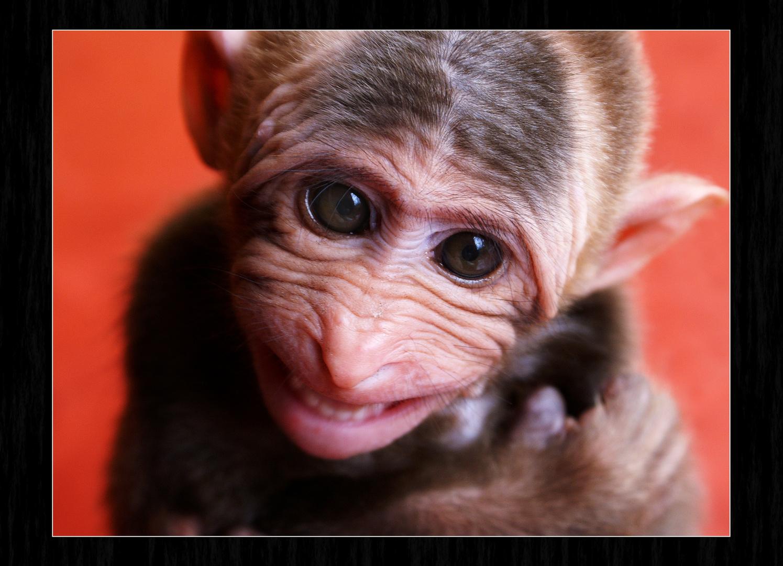 La triste sonrisa / Los animales también saben sonreir