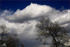 """""""La tête dans les nuages"""""""