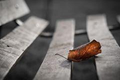 La última del otoño