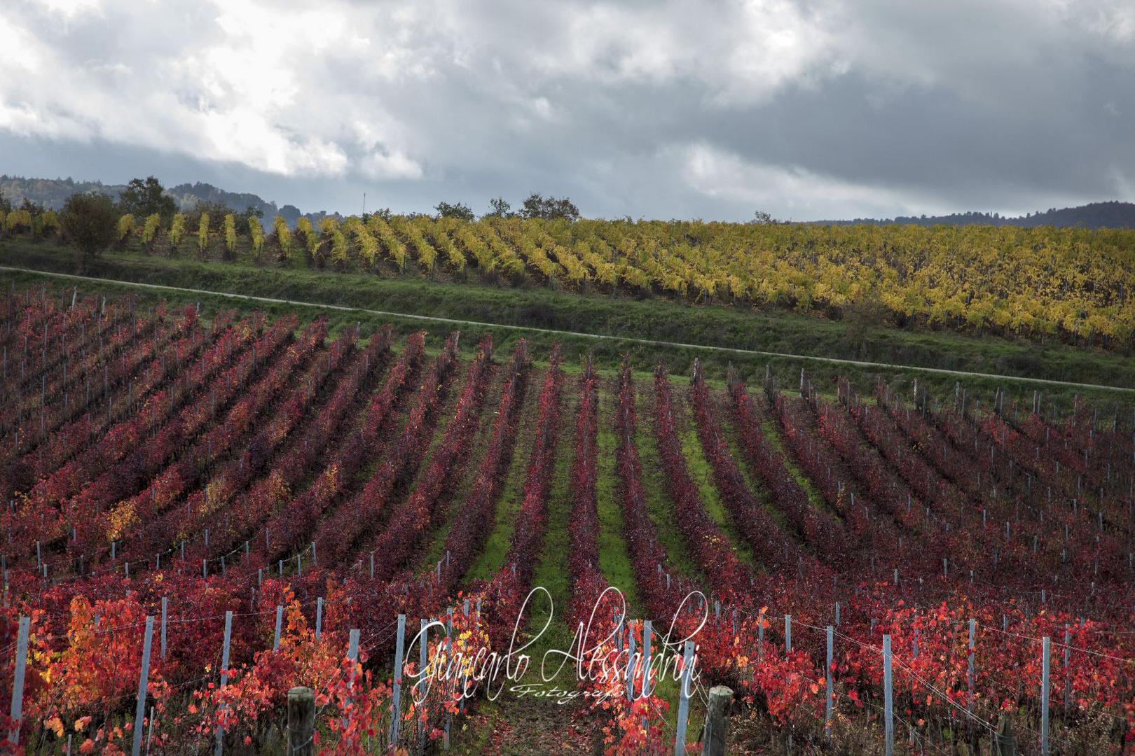 La Val di Chiana-Toscana