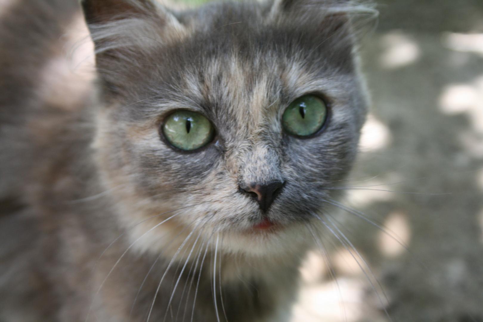 la vecchia gatta