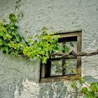 La ventana y la parra