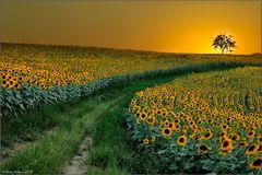 La Via del Sole