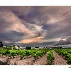 La viña y la tarde