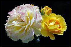 la vie d une rose......