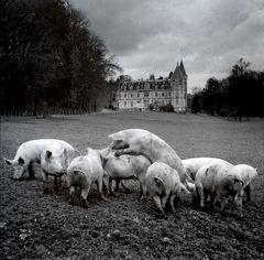 la vie de chateau, philippe salaün