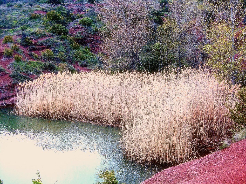 La vie reprend autour du Lac du Salagou
