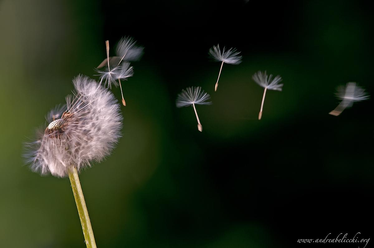 La vita e' un soffio .......................