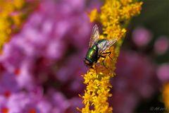 la volée - the fly - die Fliege