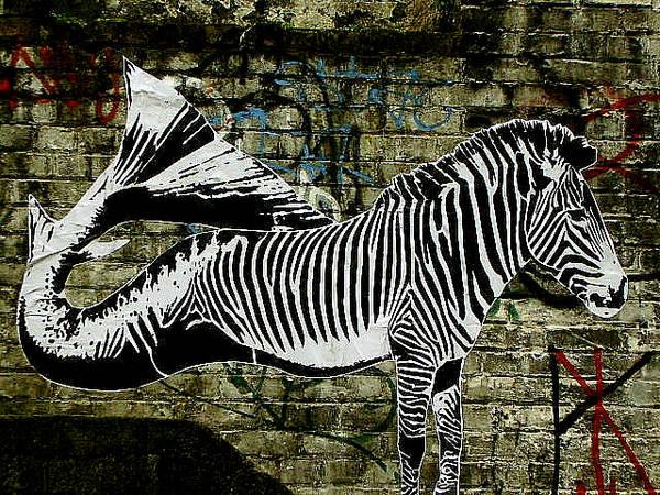 la zebrapesce