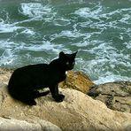 La Zorra..vicina al mare.