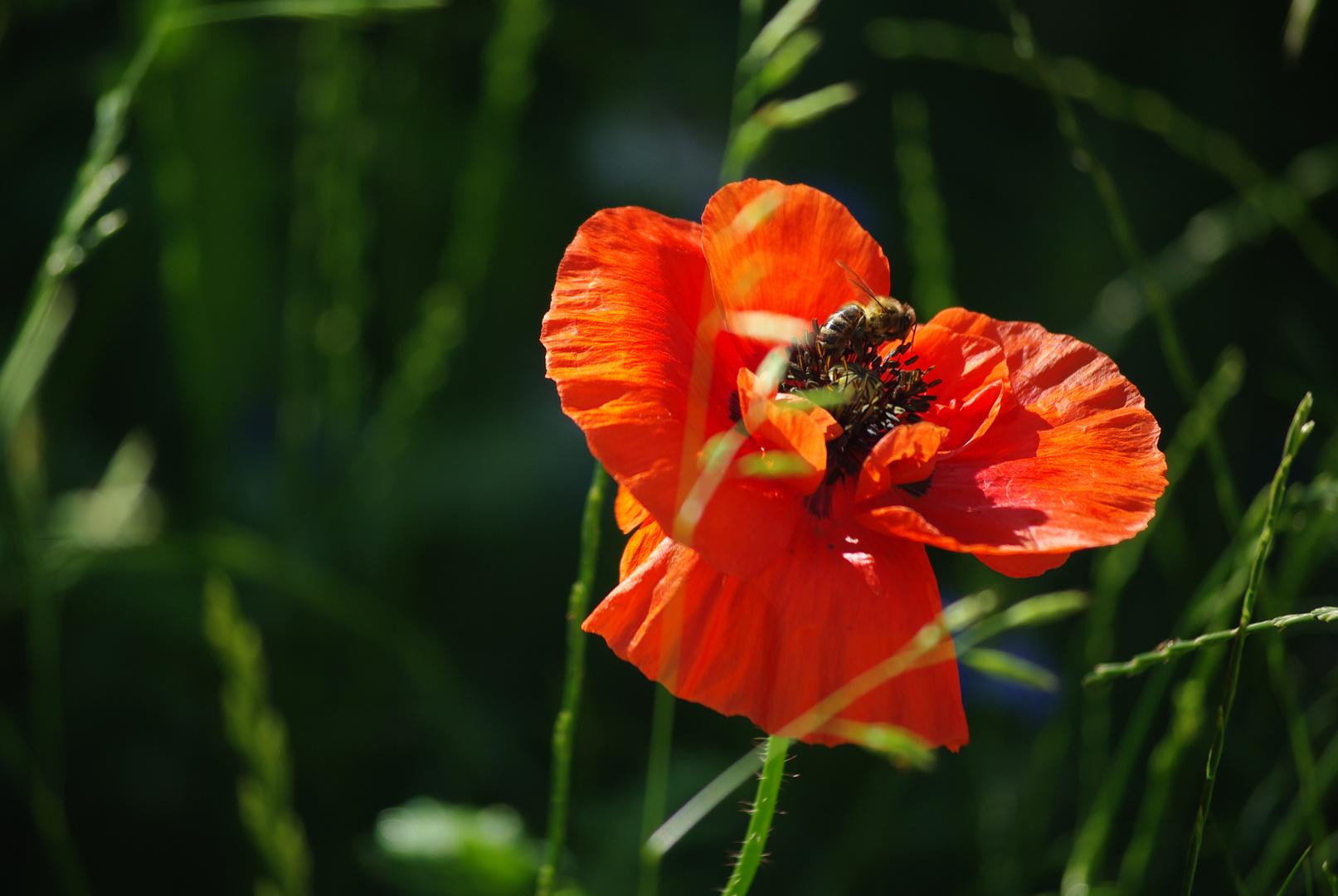 l'abeille fleur!!!