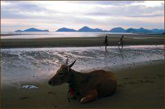 Labuanbajo-Flores am Meer