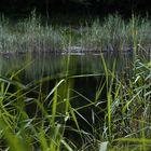 lac noir 4
