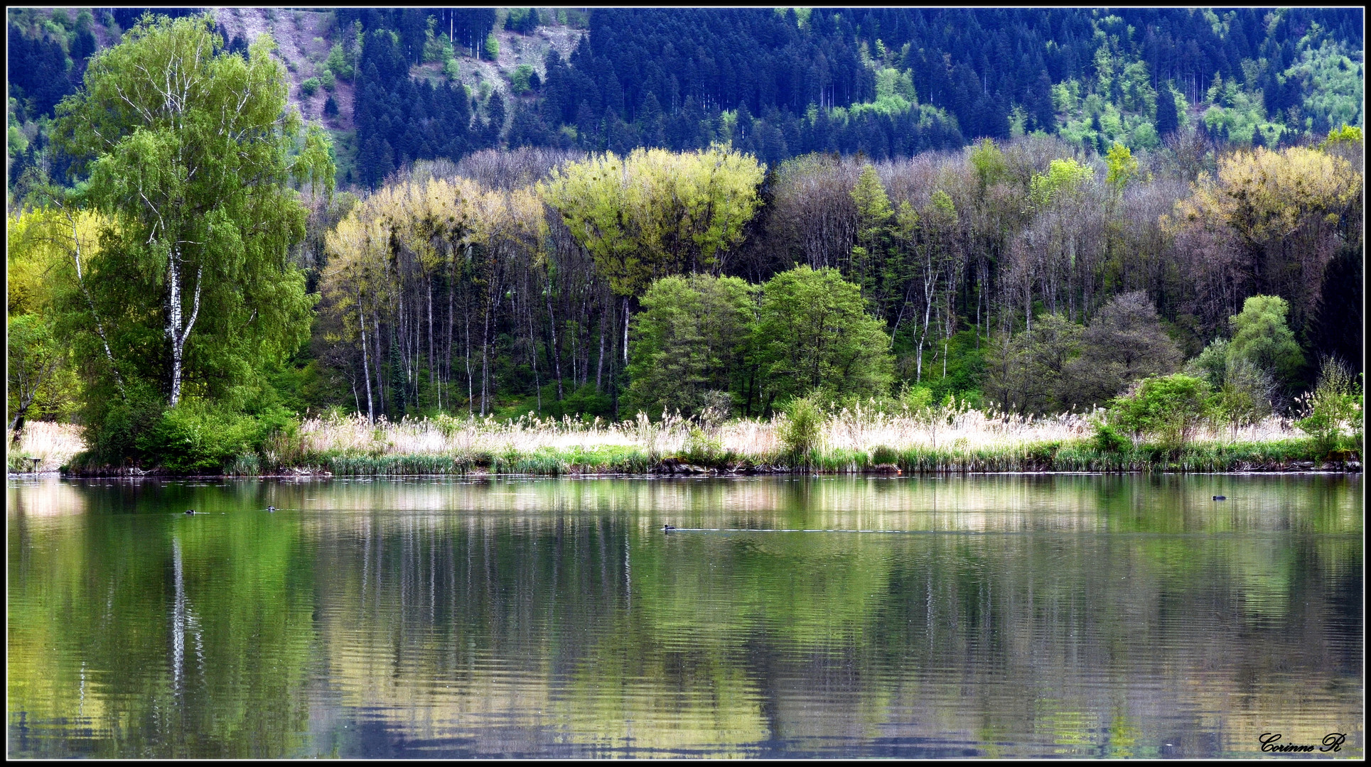 Lac paisible