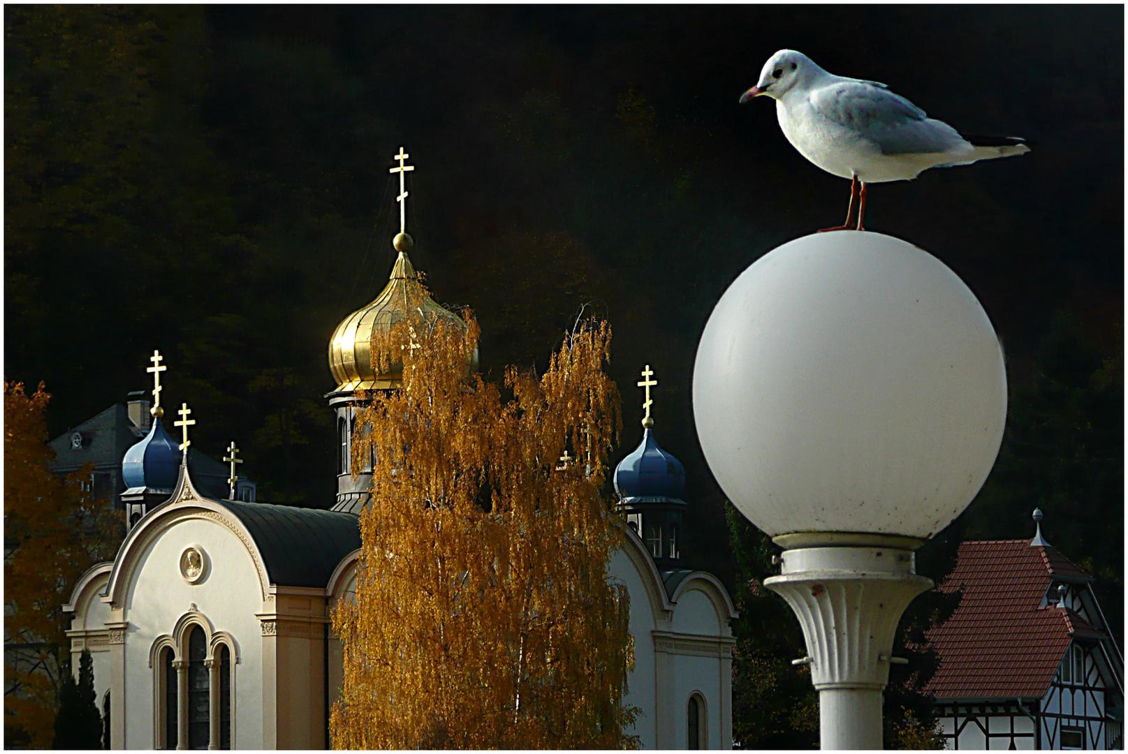 Lachmöwe und Russische Kirche Bad Ems / Lahn