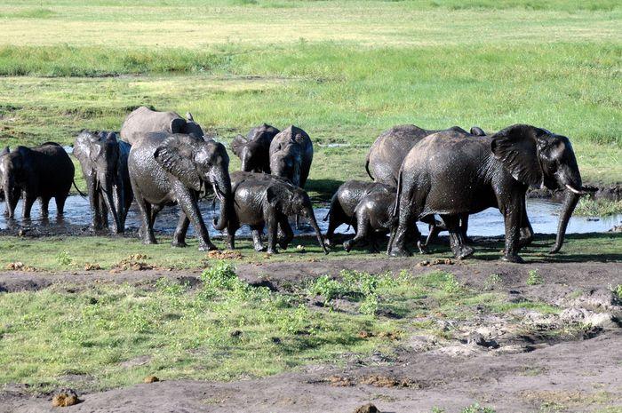Lackierte Elefanten
