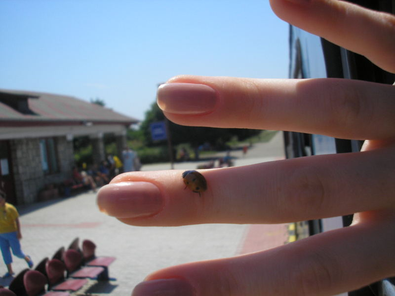 lady bird on my finger