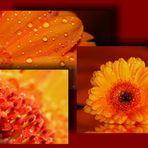...Lady in Orange...