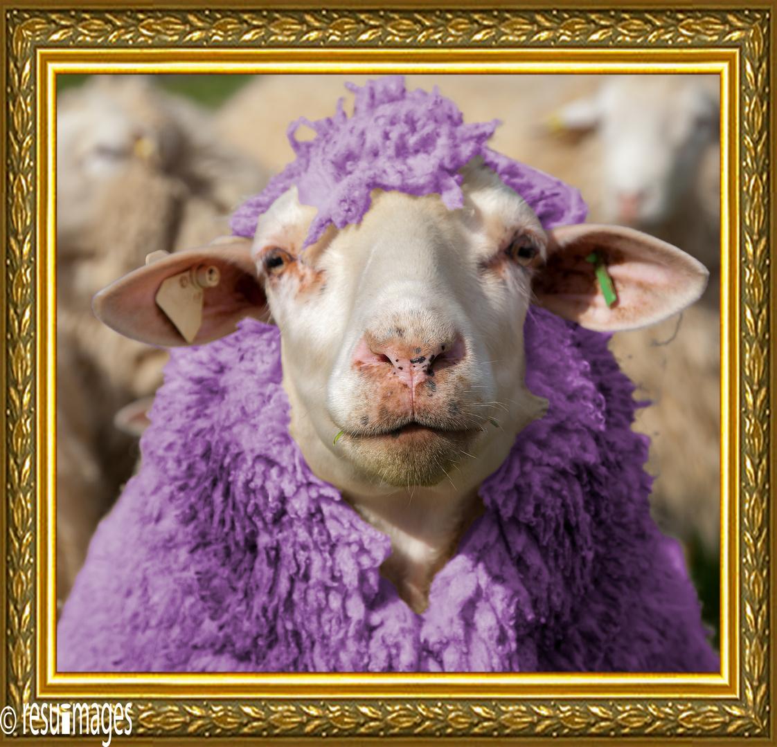 Lady Sheep