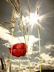 Lady Sunshine .....