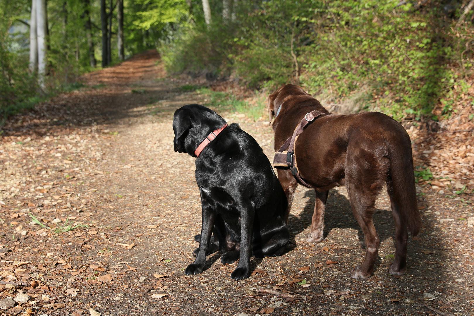 Lady und Pepper auf Beobachtungsposten
