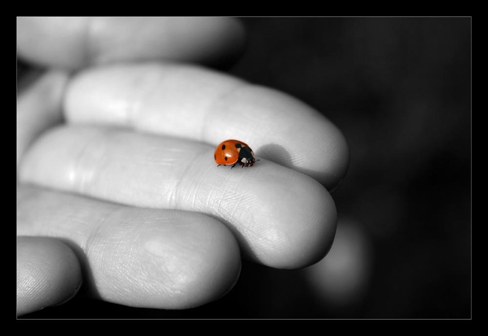 ...ladybird...