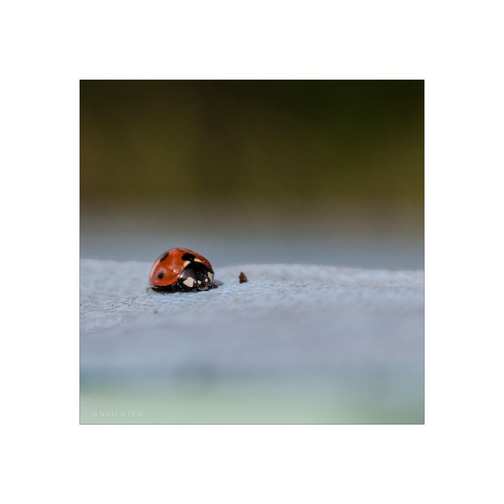 [ladybird]